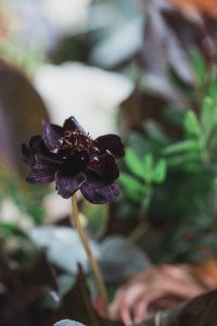 dark purple flower Elmore court wedding photographer