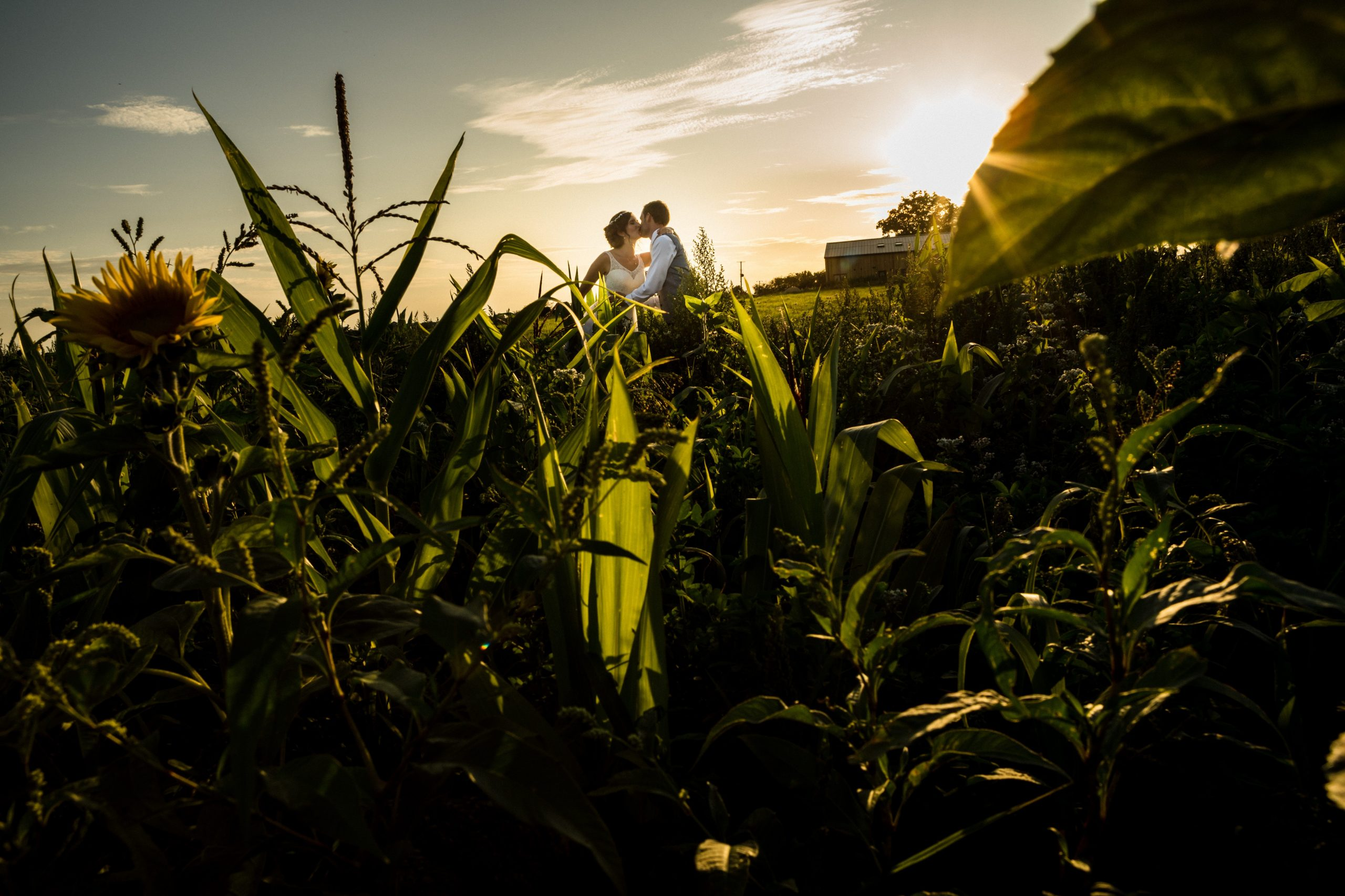 Winkworth farm couple in fields wedding day